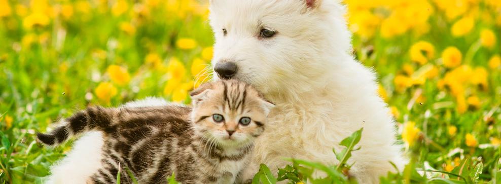 Husk til ferien med dit kæledyr