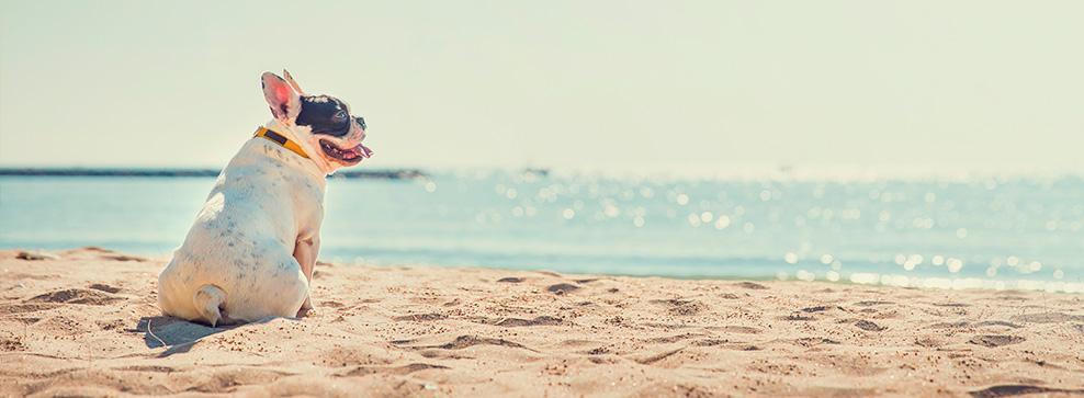 Hunde på stranden – go eller no go?